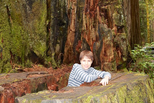 JD Boy at Redwoods National Park