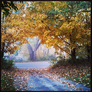 Good foggy morning! #fall #foliage #leaves #newengland