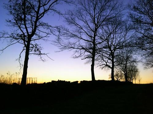[243/365] Sunset