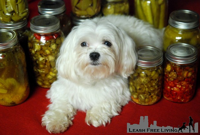 Pickled Pup