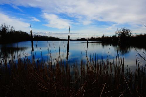 sky lake reflection water serbia belgrade beograd voda bulrush srbija nebo adaciganlija jezero refleksija trska