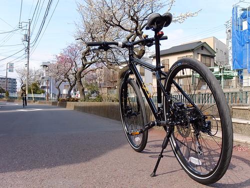 Marin Muirwoods 26`er in Yokohama by owenfinn16