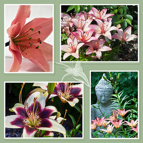 Lilies Photo Collage by Rustic Pixel