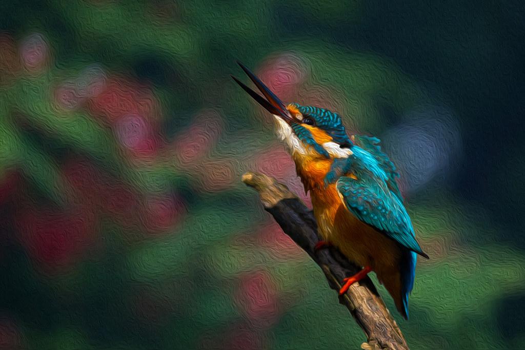 翠鳥-9722