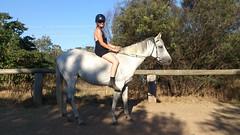14SHDP002 - Illoura Horse Paddocks ACT