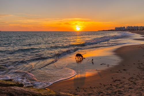light sunset dog beach spain nikon friend europe surf meko rota mekyungko