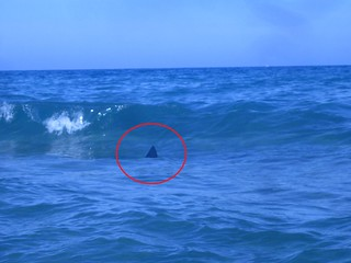 avvistato squalo