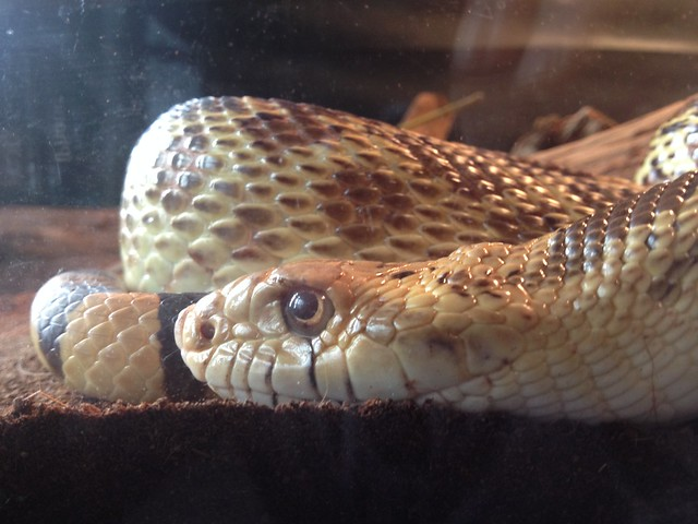 Snake friend