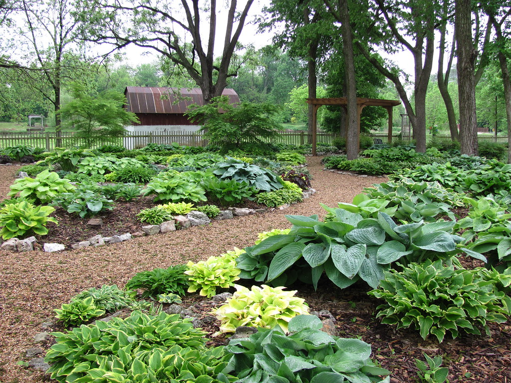 Hosta Garden May, 2013 Looking South Toward Drummond Lake Hosta Garden May,  2013 Looking South Toward Drummond Lake ...