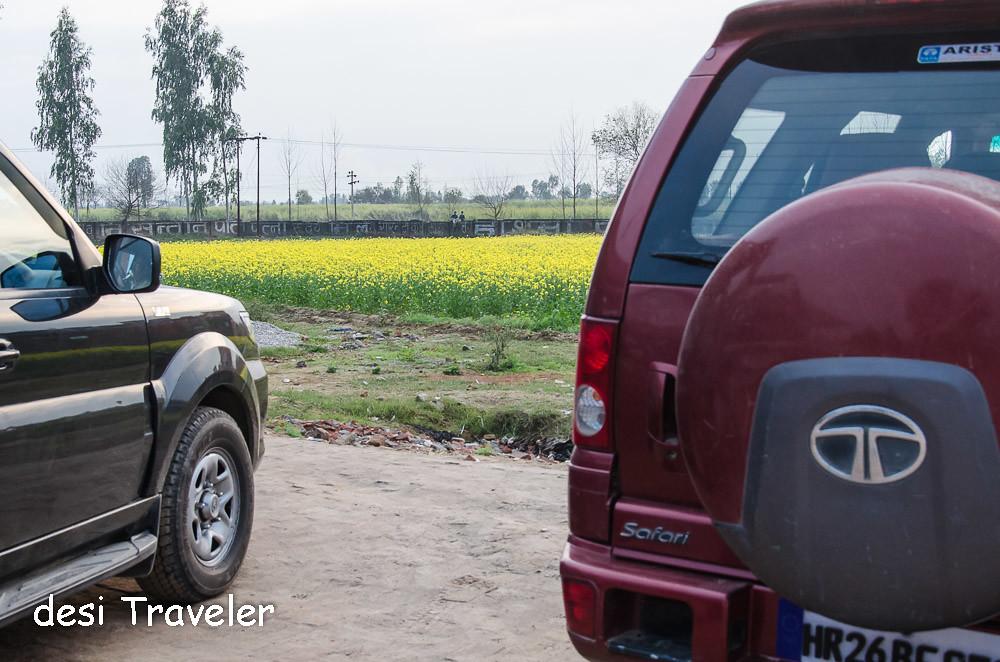 Tata Safai Sarson Ke Khet Mustard Fields