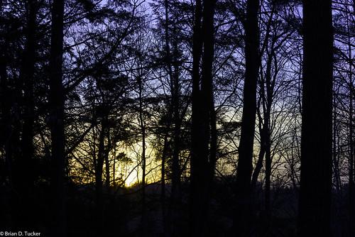 trees sunset ontario canada silhouette evening greenwood ajax eveninglight d600 greenwoodconservationarea briandtucker