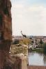 Stork and baby, Zamora, Spain