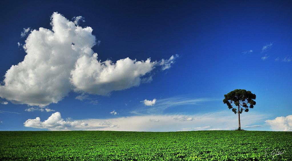 cloud & Tree