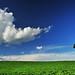 cloud & Tree by T Glow