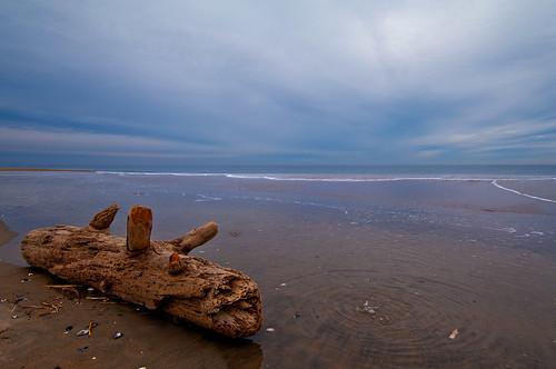 winter massachusetts atlantic driftwood seashore plumisland