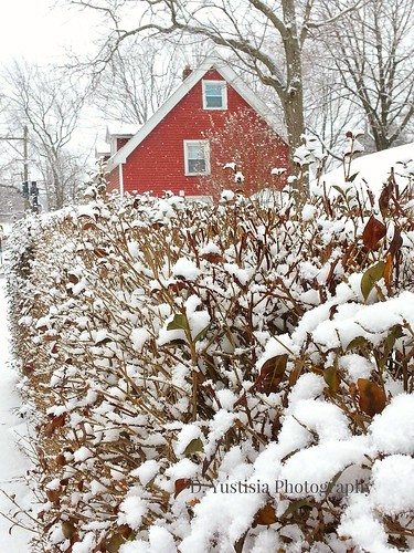 A Red House & the Snow