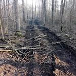 Breite Schneisen die bei der Baumfällung hinterlassen werden