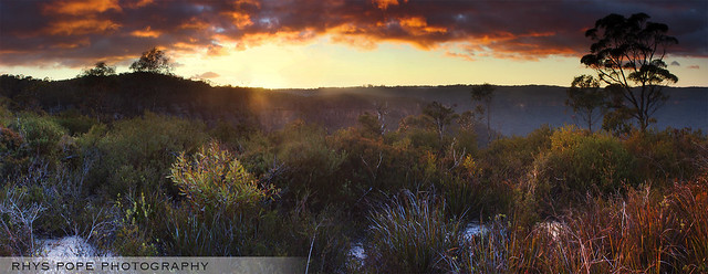 Sunrise In The Aussie Scrub || BLACKHEATH