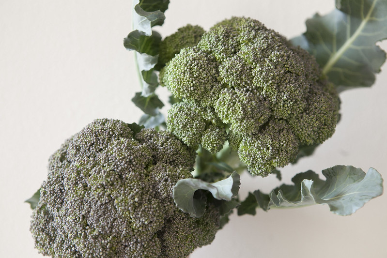 broccoli harvestIMG_2575