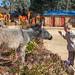 2012/2013 Visitors & Family at Malealea Lodge