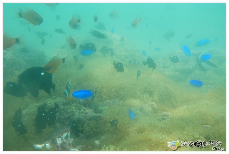 2013歐船長東海休閒漁業_99