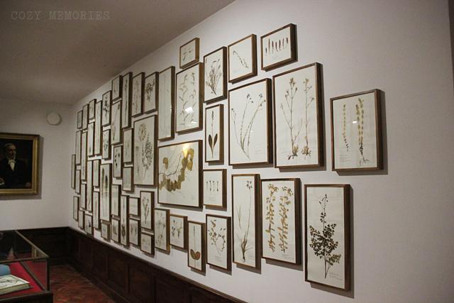 Musée Gassendi, Digne-les-Bains (France)