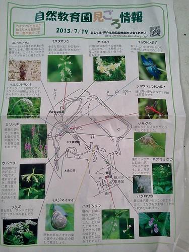 国立科学博物館附属自然教育園 見ごろ情報