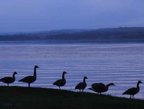 nature birds silhouette sunrise nikon canadageese chautauqualake coolpixp500 blinkagain