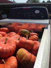 Mad pumpkins
