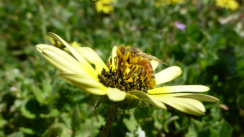 Bee on exotic