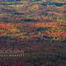 Omni Autumn