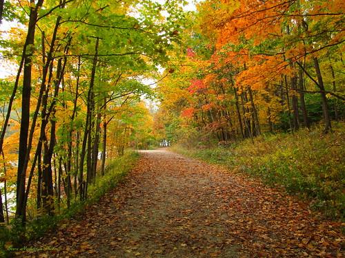 autumn trees fall leaves canon fallcolors powershot foliage trail waywayandastatepark sx150is smack53
