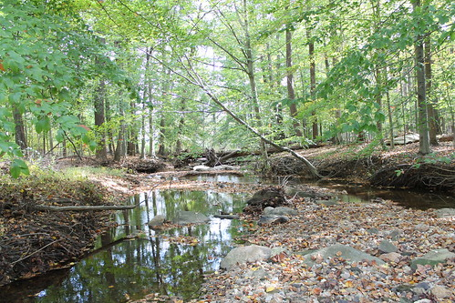 Image of the stream and trees around Northwest Branch Watershed.