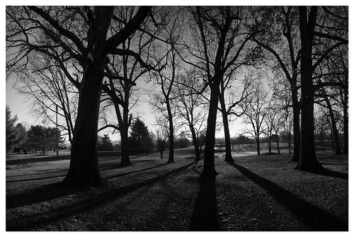 morning trees bw panorama sunrise landscape morninglight blackwhite shadows olympusblackwhite mzuiko1250mm