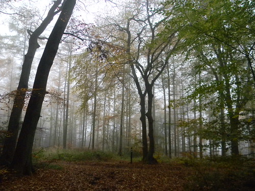 Mist in the trees