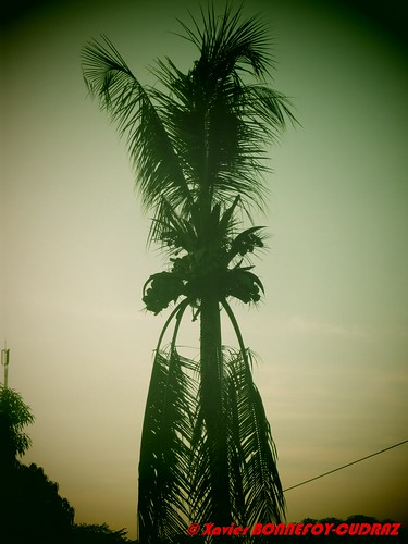 oldcamera palmier guiglo moyencavally côted'ivoirela