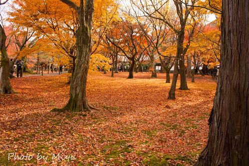 IMG_5177東福寺