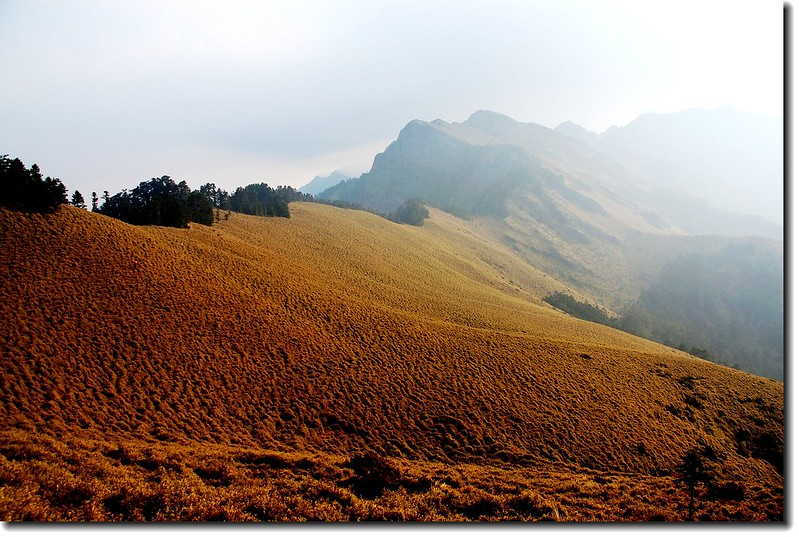 玉山南峰西稜東側草原坡 1