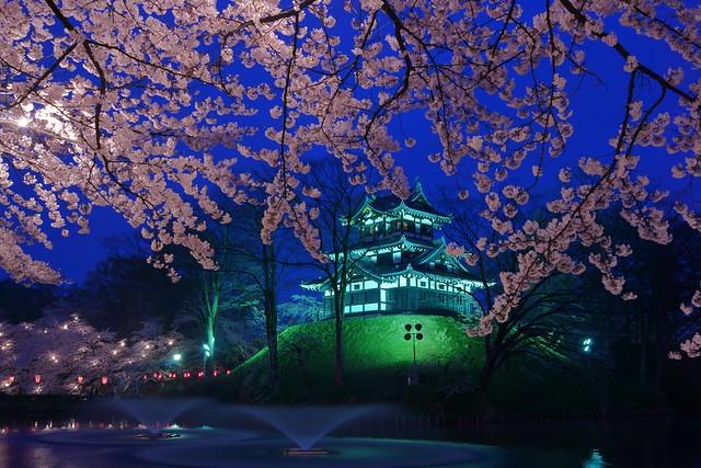 写真_夜桜の宴1