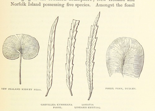 Image taken from:  Title: Te Ika a Maui, or, New ...