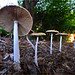 Mushrooms at Point Defiance Park, Tacoma, Washington by Don Briggs
