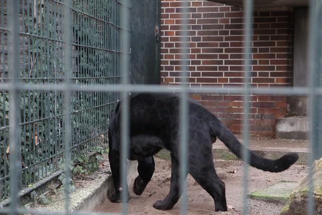 218 - Zoologischer Garten