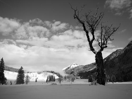 schnee österreich berge alpen obertauern baum tauern untertauern gnadenalm