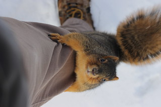 223/365/2049 (January 20, 2014) - Squirrel in the Winter at the University of Michigan (January 20, 2014)