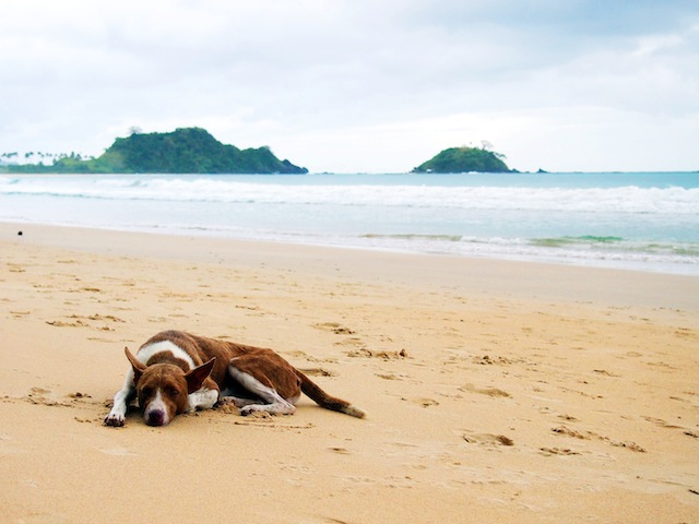 El Nido Nacpan beach dog