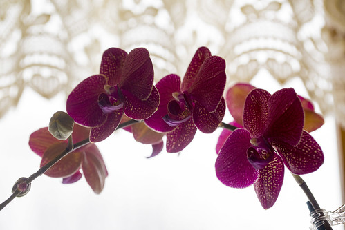 02-14 February Orchids-0485-7