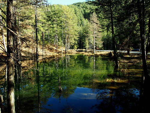 trees mountain lake water colors forest hellas greece epirus greveniti mygearandme