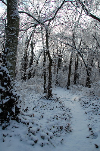 Stonewall Woods Ice Storm