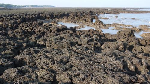 多孔隙環境的藻礁礁體(攝於觀新藻礁)