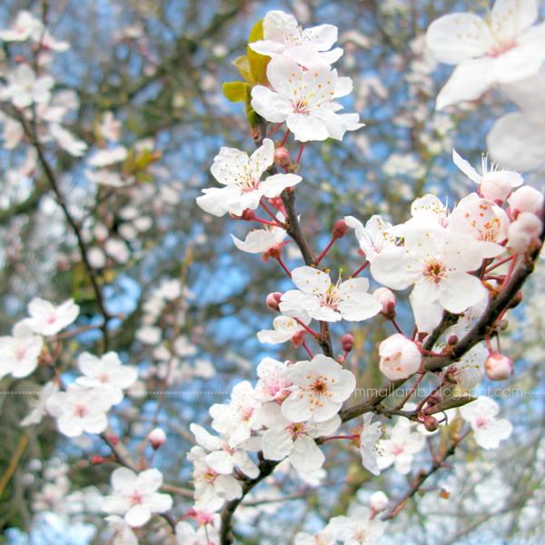 colour palette : spring blossom | Emma Lamb